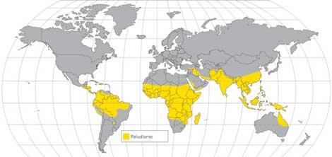 Madagascar : des progrès dans la lutte contre le paludisme