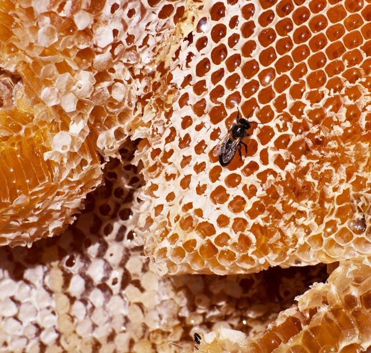 Le miel et les abeilles de Madagascar