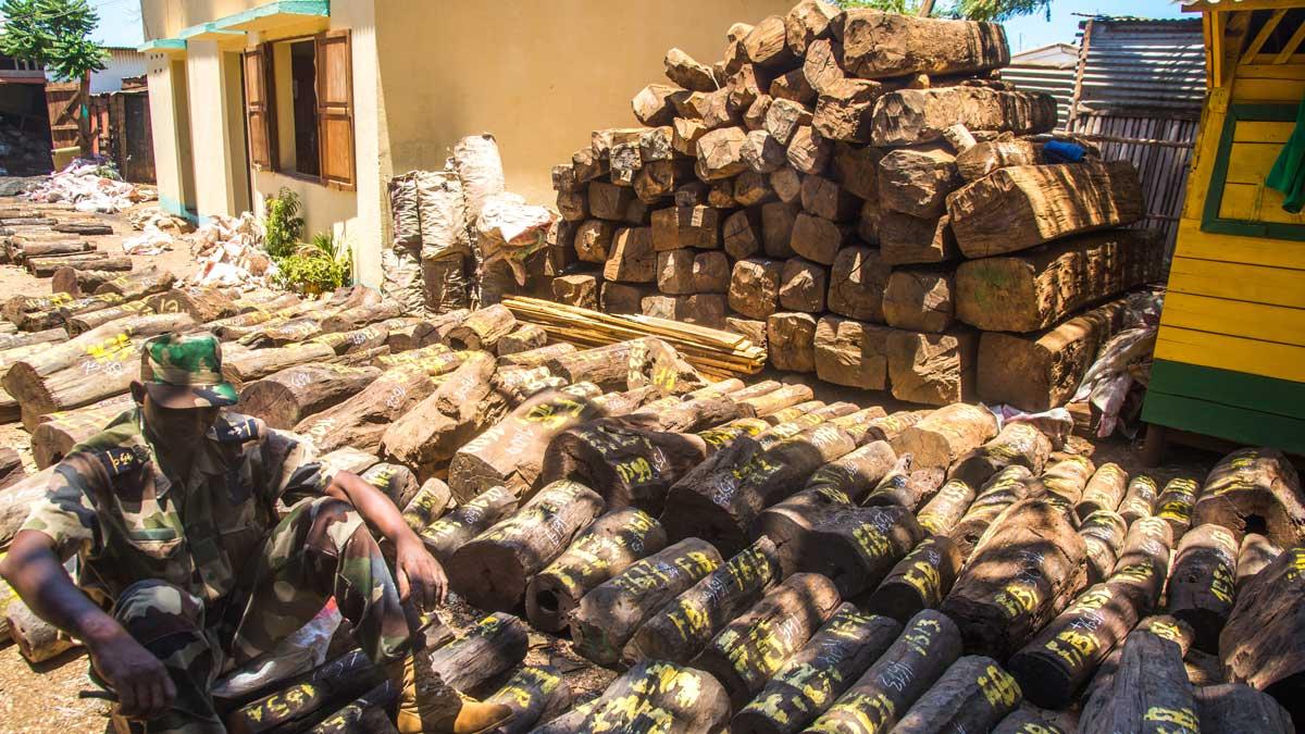 Bois de rose  Madagascar risque des sanctions internationales ~ Bois De Madagascar