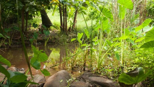 Le Jardin Tropical Une For T Au C Ur De La Ville De
